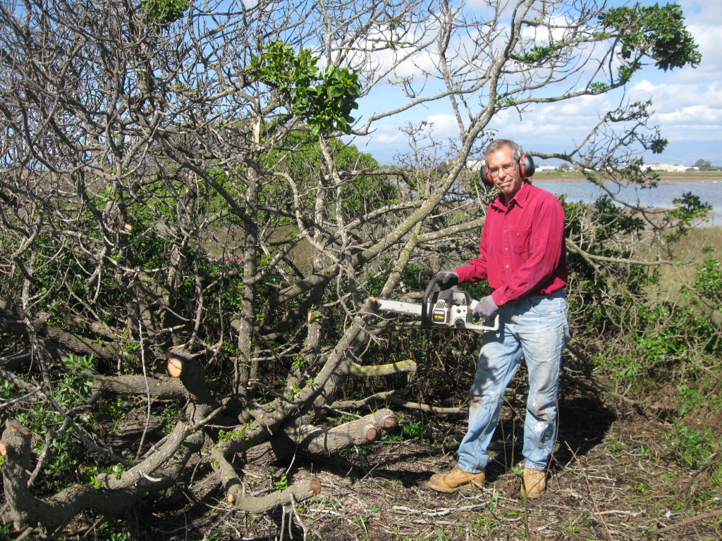 IMG_3013 Tom Chainsaw bush marsh