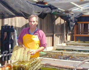 Proteus abalone hatchery